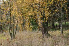 Herbststille