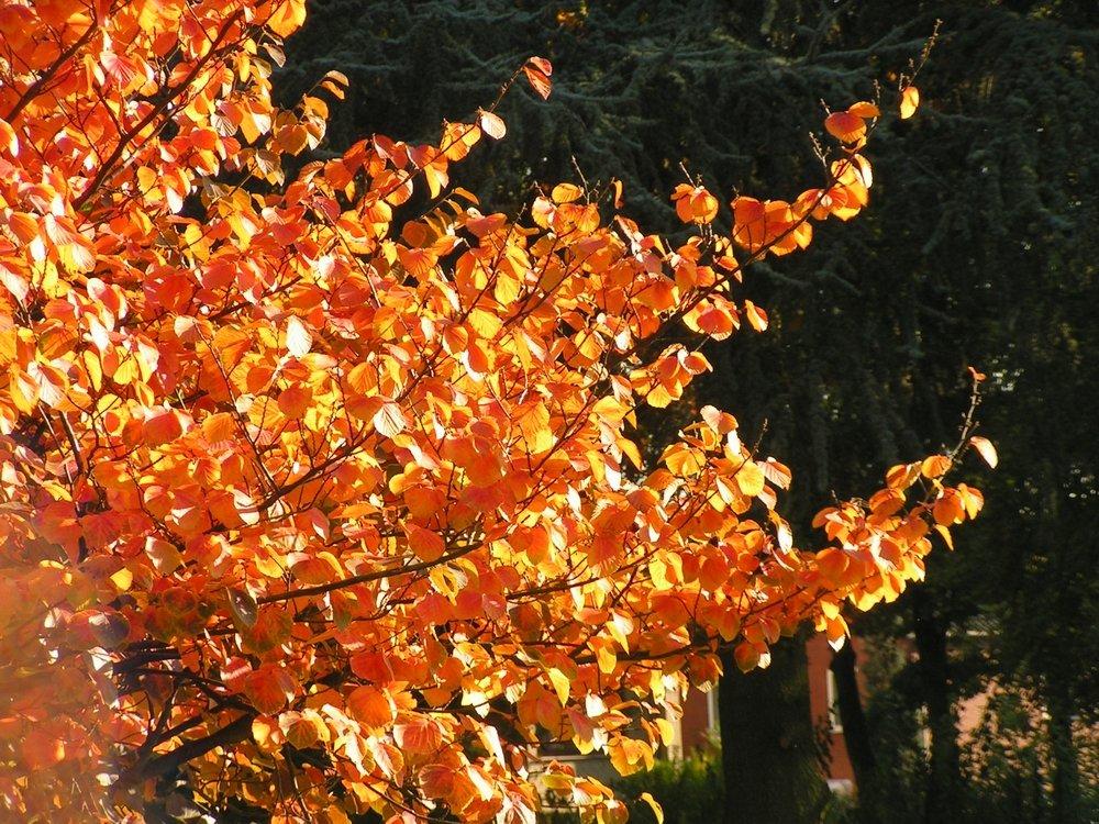 Herbststimmung-2