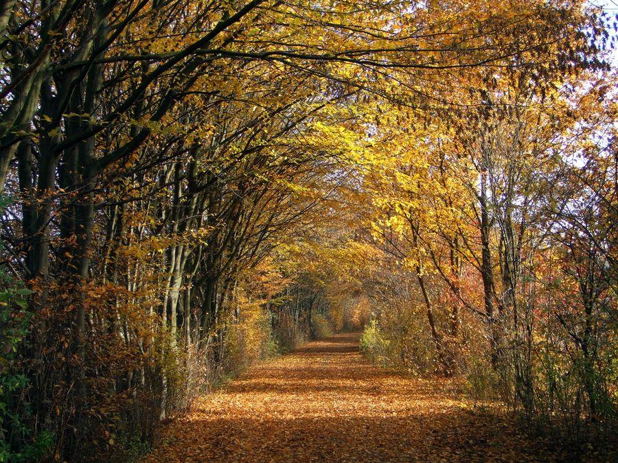 Herbststimmung 3