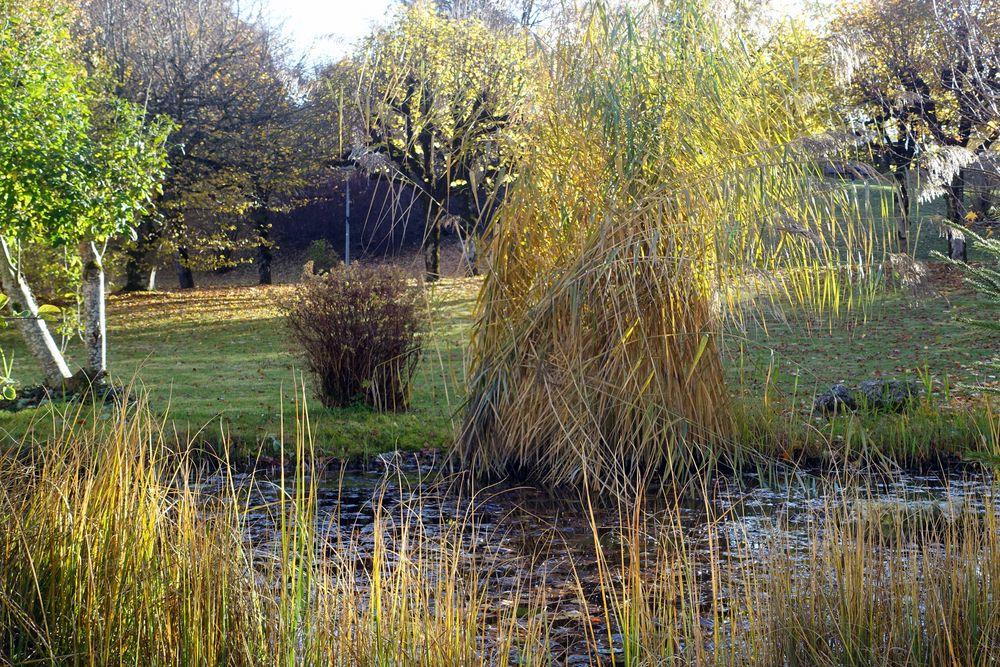 Herbststimmung an kleinem Biotop