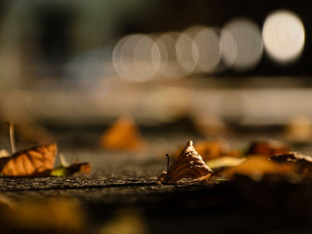 Herbststimmung bei Nacht