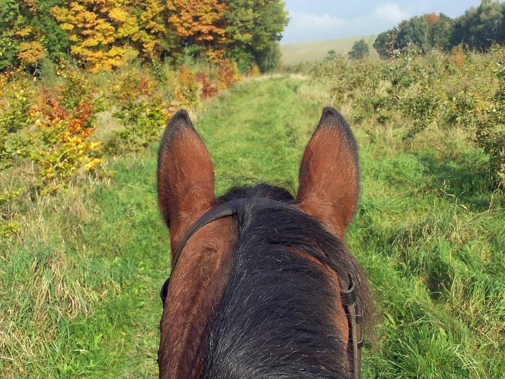 Herbststimmung durch zwei Ohren gesehen