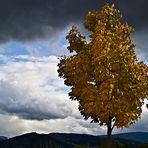 Herbststimmung I