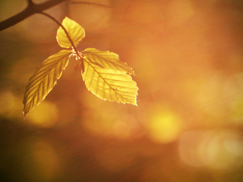 Herbststimmung im Hochsommer