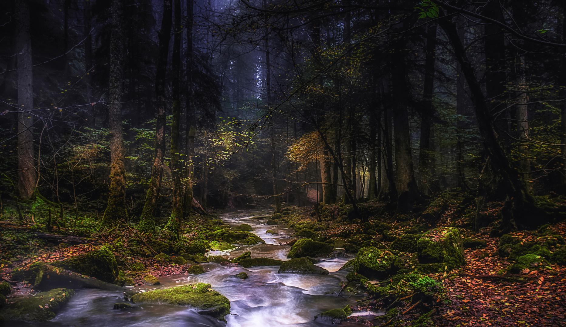 Herbststimmung im Monbachtal