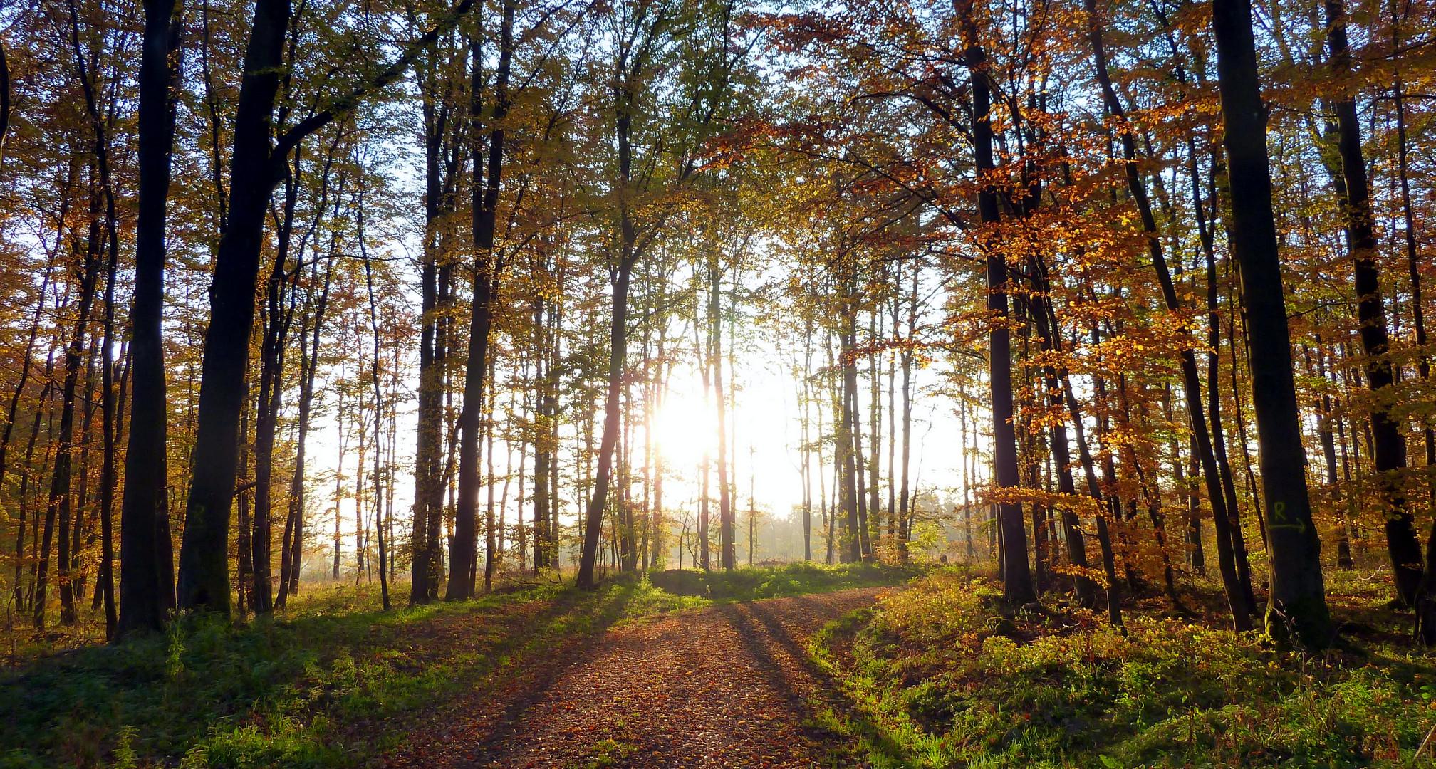 Herbststimmung im Vogelsberg