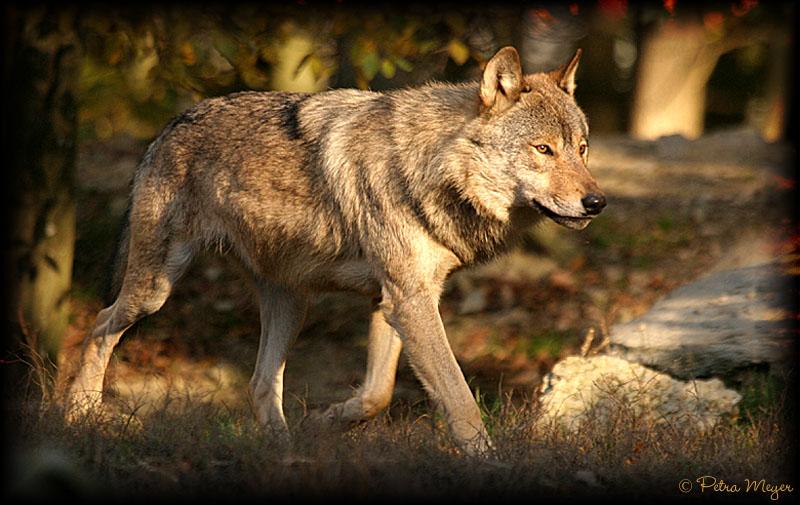 Herbststimmung im Wolfsgehege