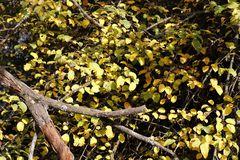 Herbststimmung in der Muldaue