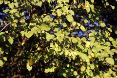 Herbststimmung in der Muldeaue - Bild 1