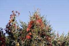 Herbststimmung in der Muldeaue - Bild 2