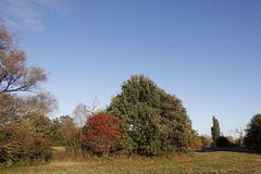Herbststimmung in der Muldeaue - Bild 3