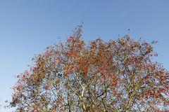 Herbststimmung in der Muldeaue - Bild 6