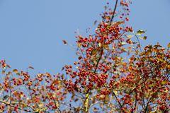 Herbststimmung in der Muldeaue - Bild 7