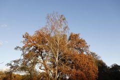 Herbststimmung in der Muldeaue - Bild 8