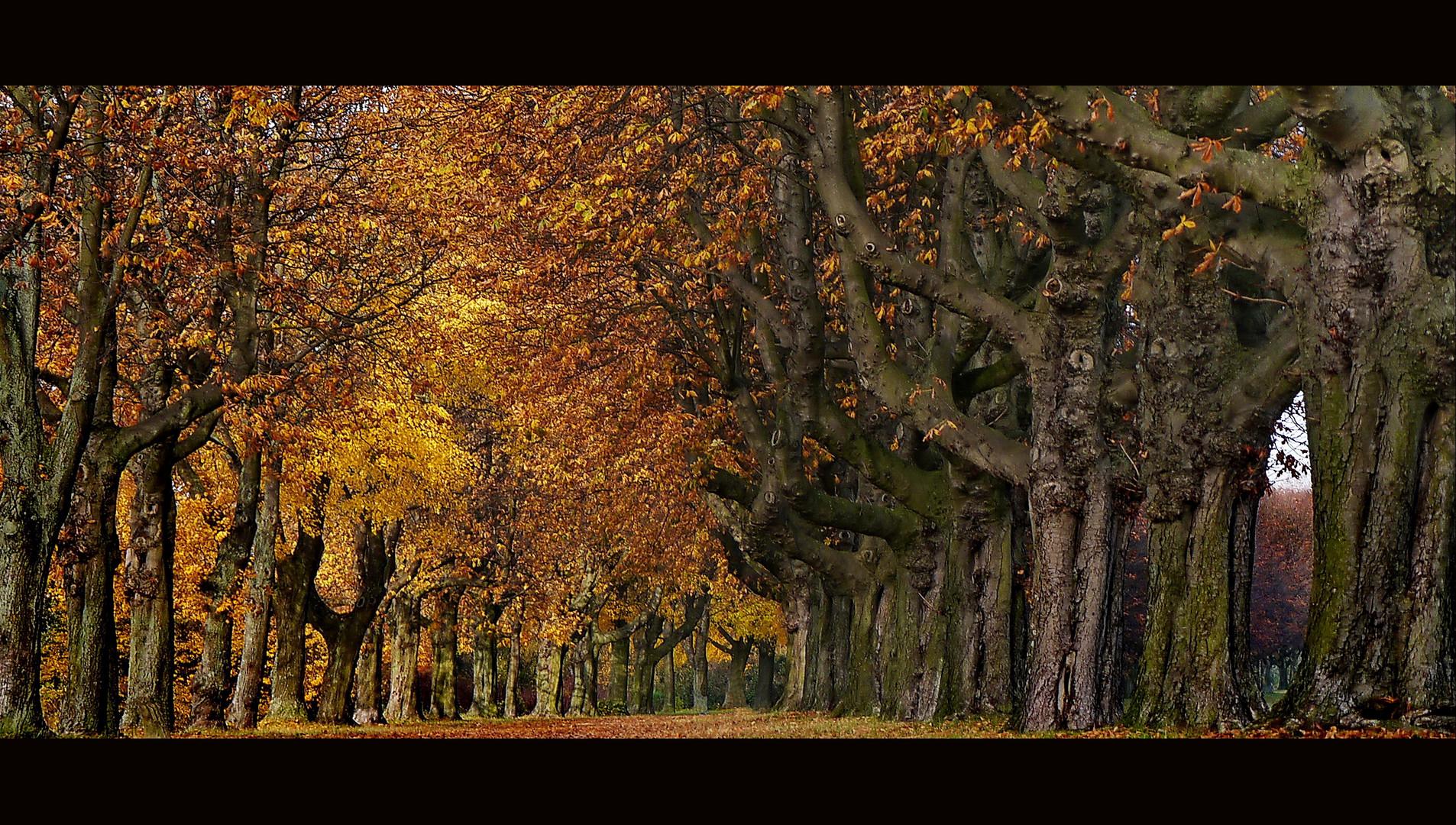 Herbststimmung in Grimlinghausen am Rhein
