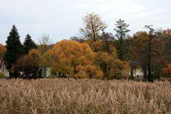 Herbststimmung über dem Schilf