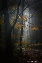 Herbststimmung..15