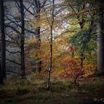 Herbststimmung..16
