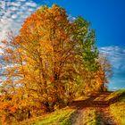 Herbststimmung_4