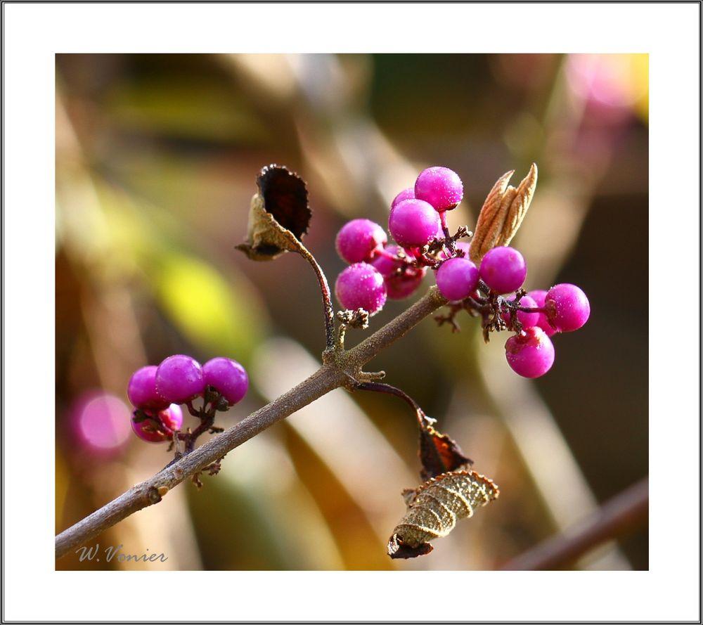Herbststrauch mit Beeren