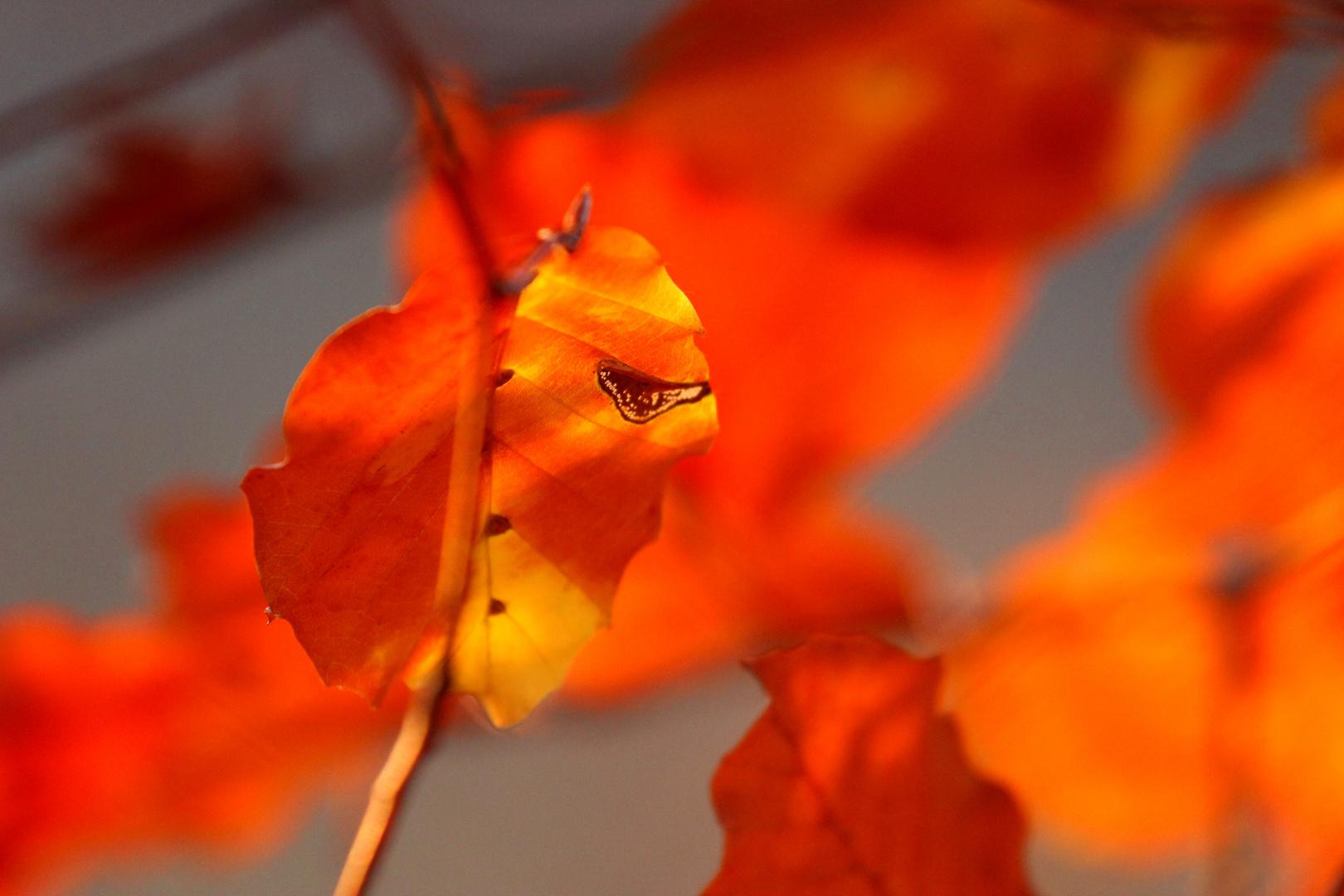 Herbststudie in Rot