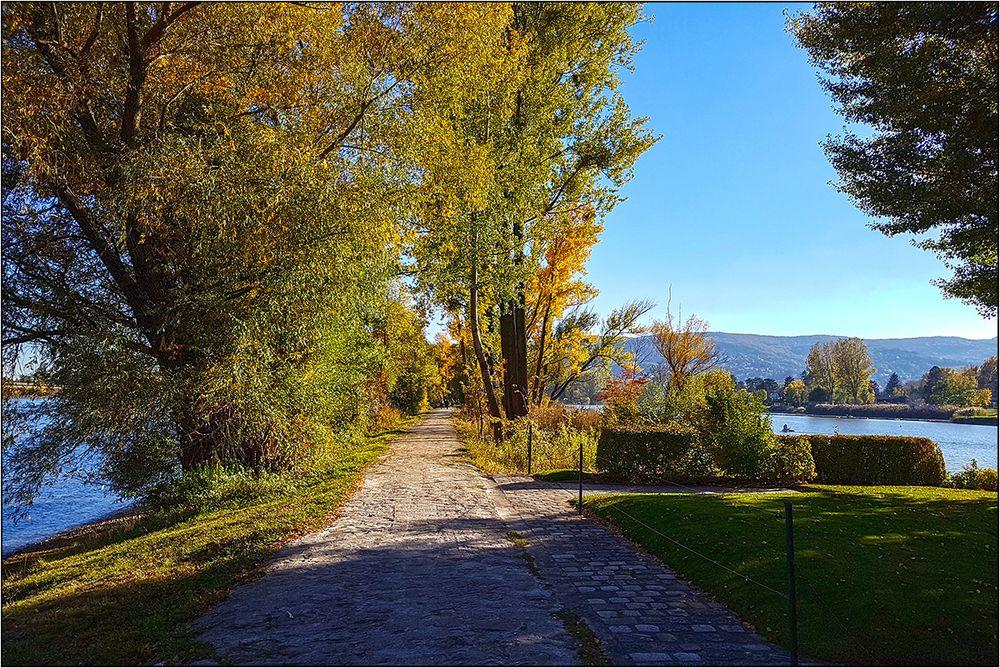 Herbsttag in den Donau-Auen