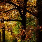 Herbsttage 2