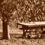...Herbsttage ...