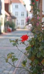 Herbsttage in Schleswig
