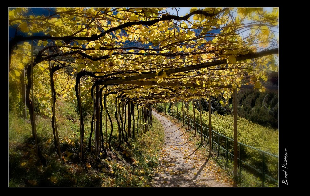 Herbsttage in Südtirol_03