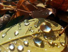 Herbst(Tau) 1.