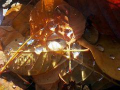 Herbst(Tau) 2.