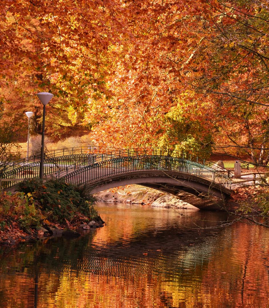 Herbsttraum im Rombergpark