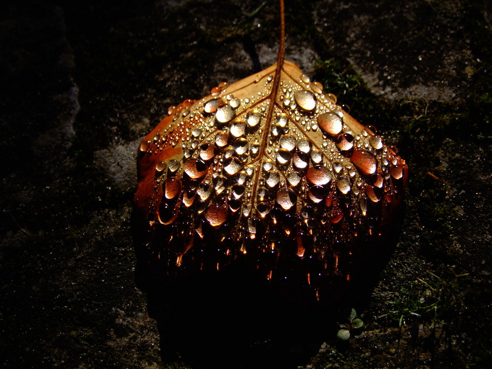 Herbsttropfen