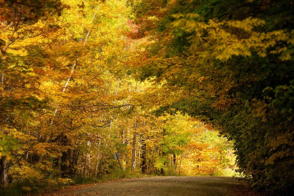 Herbsttunnel