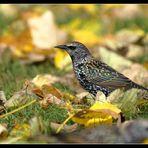 """"""" Herbstvogel """""""