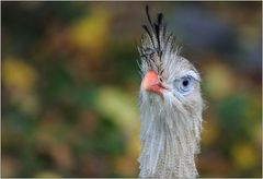 ... Herbstvogel ...