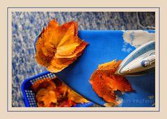 Herbstwäsche II