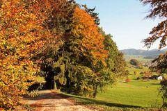 Herbstwald (1)