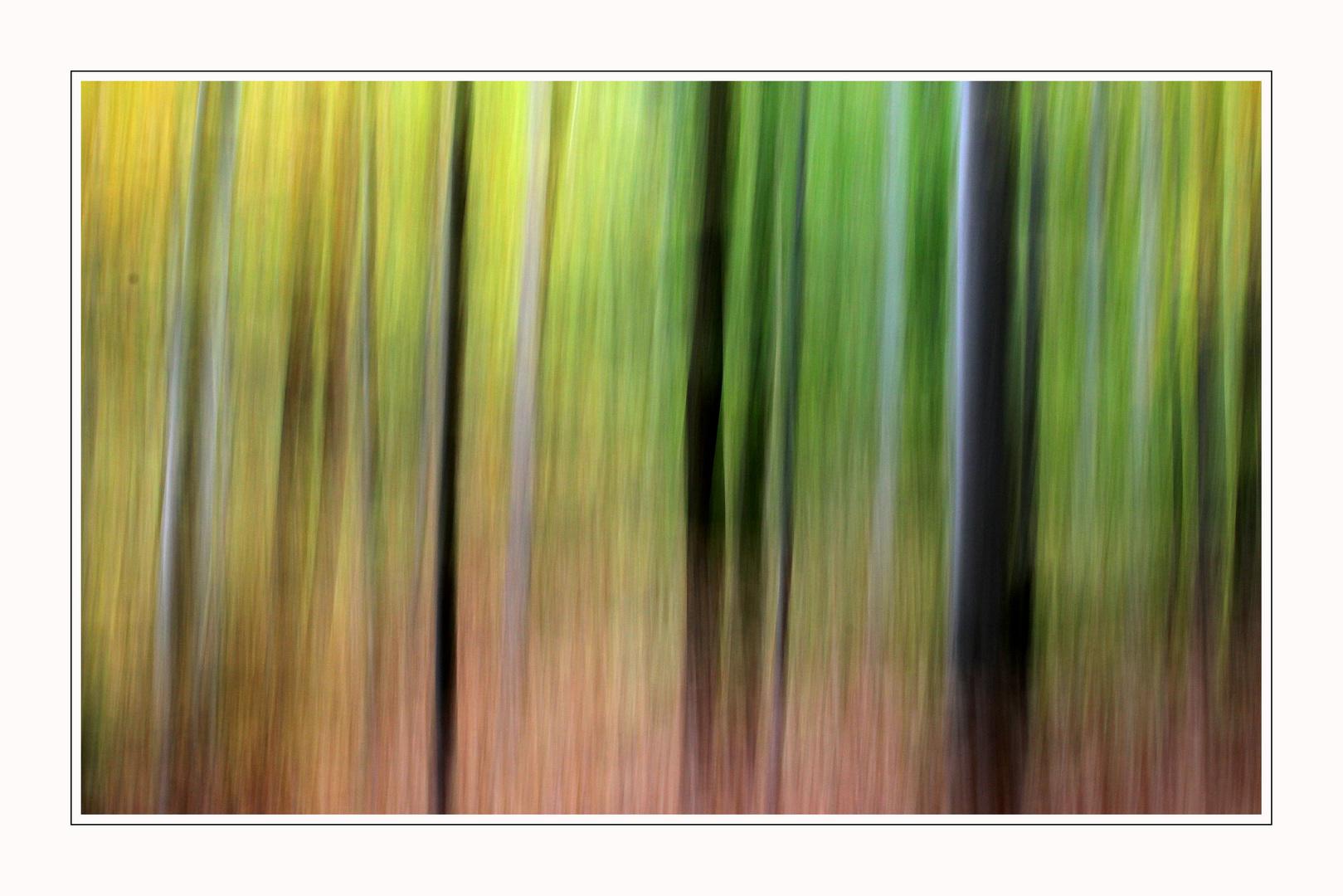 Herbstwald 1