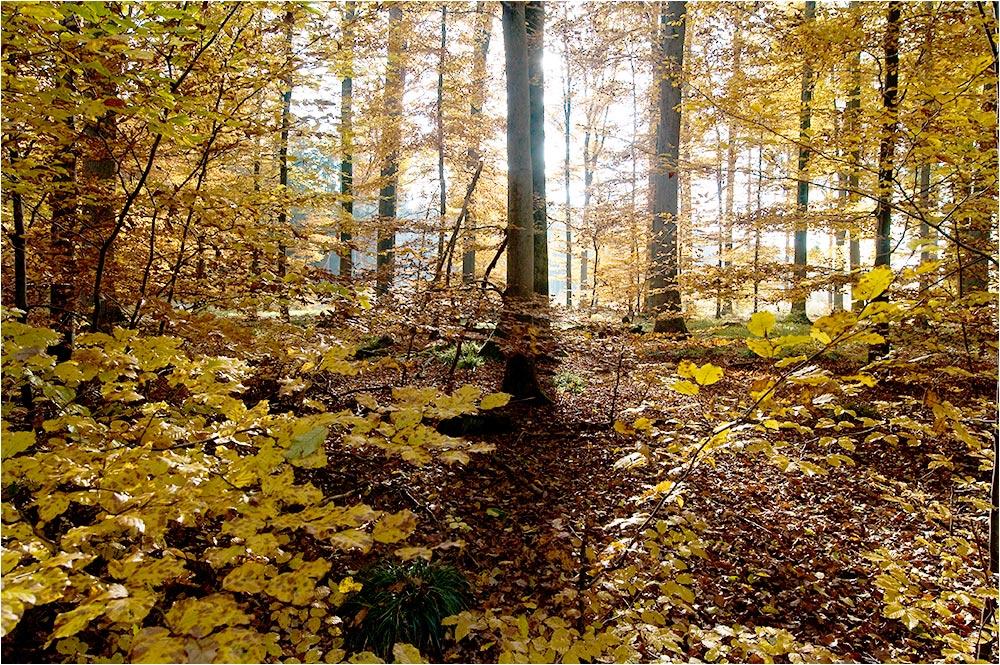 Herbstwald - 2
