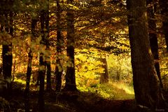 Herbstwald (2)