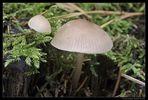 Herbstwald #2