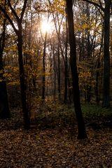 Herbstwald, 2011