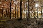 Herbstwald - 3