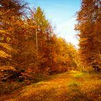 Herbstwald #4