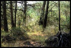 Herbstwald...