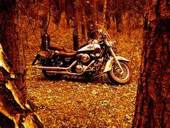 °°° Herbstwald °°°