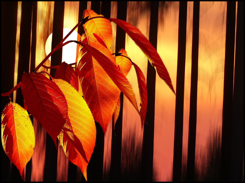 Herbst.Wald.....