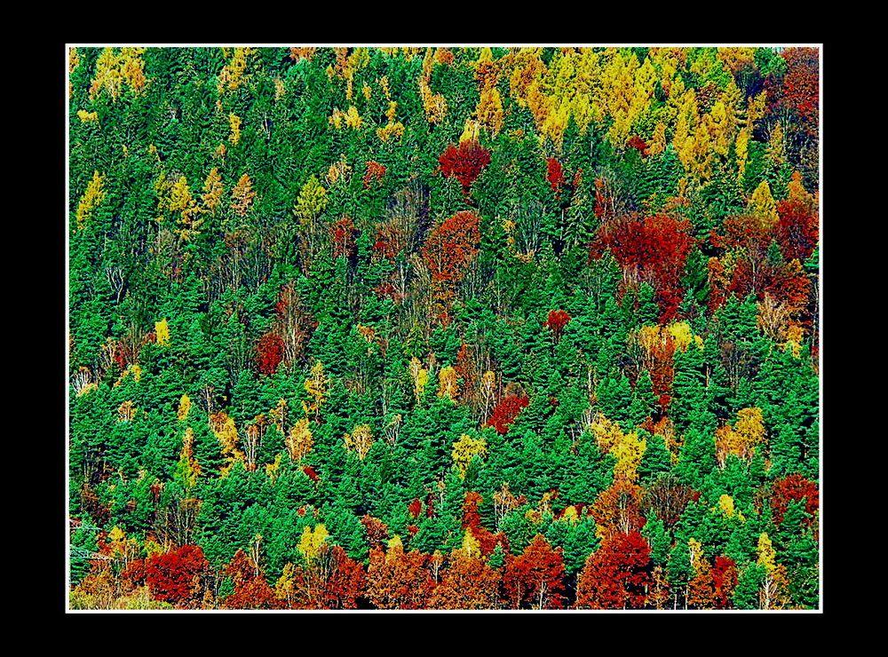 Herbstwald am Berg II